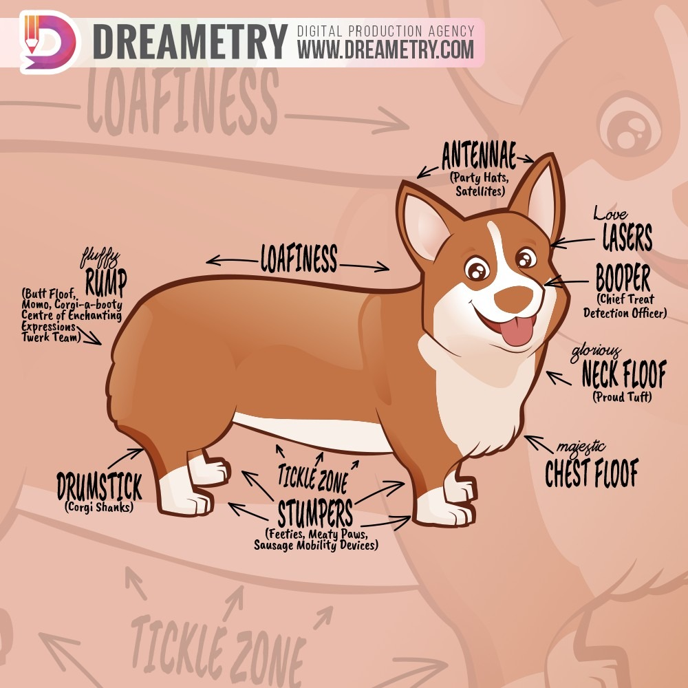 Dog Anatomy Illustration
